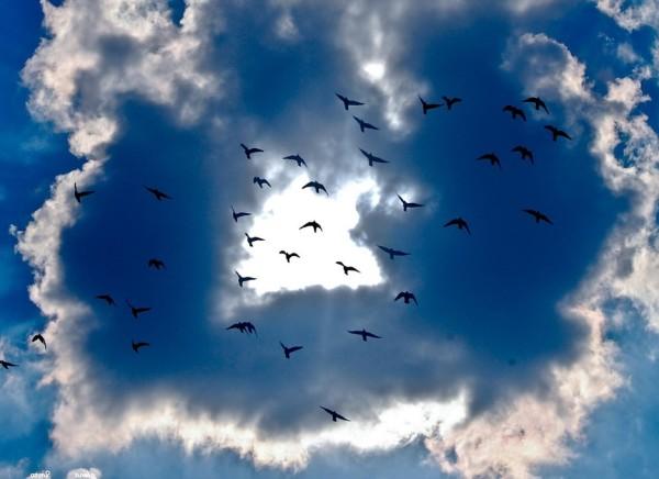 Freiheit_Voegel_fliegen