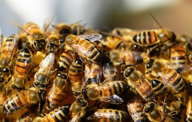 Mittel gegen Bienen-Schädling entdeckt