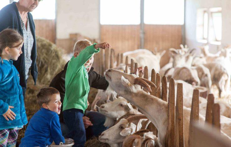"""Über 2.000 Betriebe bieten """"Urlaub auf dem Bauernhof"""""""