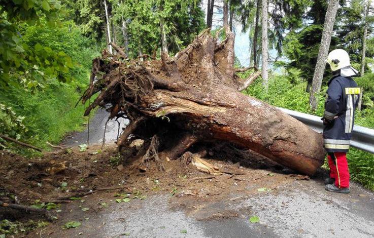 Baum fällt auf Straße – Frau verunfallt