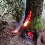 Ungewöhnlicher Brand im Vinschgau