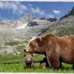 Il breve letargo dell'orso