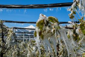 Frostnacht, Landwirtschaft, Wetter, Agrar, Wintereinbruch