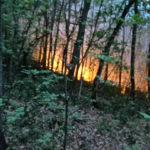 Waldbrand in Terlan