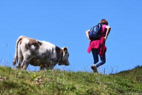 Ferien, Rucksack, Natur, Wiese, Alm, Frau, Weide, Ausflug, Wetter, Alpin