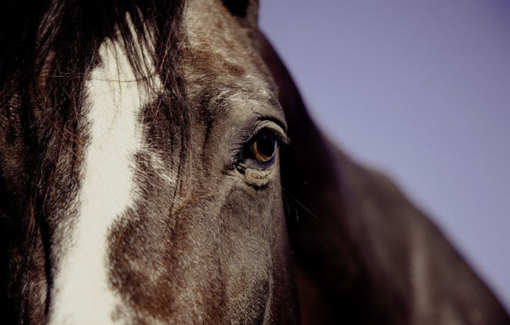 Pustertal: Pferd beißt Vierjähriger in den Kopf