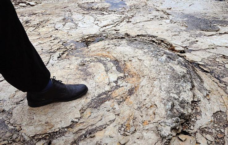Längste und größte Dino-Spur: Tier war 35 Tonnen schwer