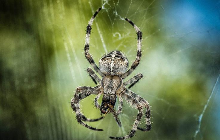 Schock-Studie: Spinnen könnten Menschheit ausrotten