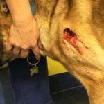 Tierhasser feuert mit Schrotgewehr auf Hund