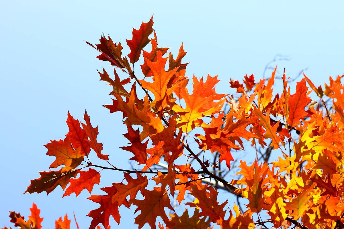 G sund und bunt samhain und der ewige kreislauf des for Immagini autunno hd