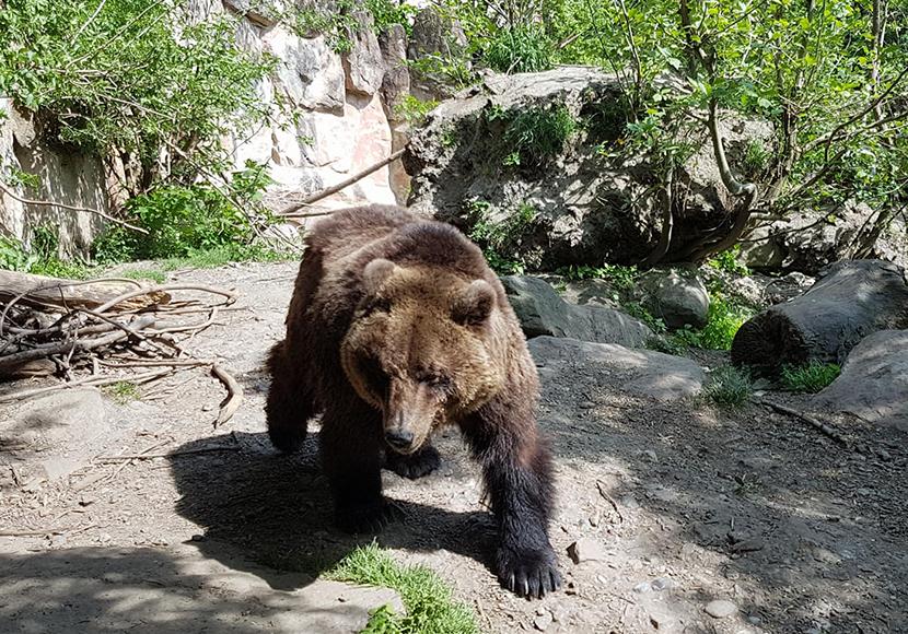 Südtirol Bär